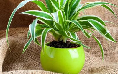 Patak-O savjeti: Vratite sjaj listovima biljaka majonezom!