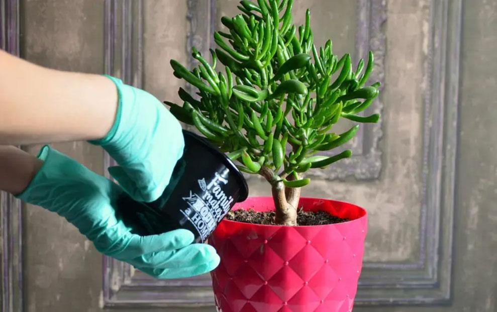 Patak-O savjeti uz koje će sobne biljke uvijek biti zdrave i lijepe.